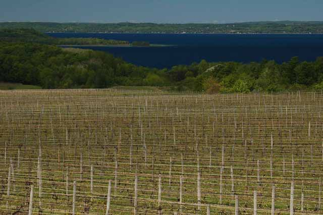 vineyards with West Grand Traverse Bay in background